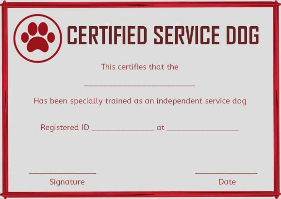 Dog Training Certificate Template Fresh Service Dog Training Certificates Template