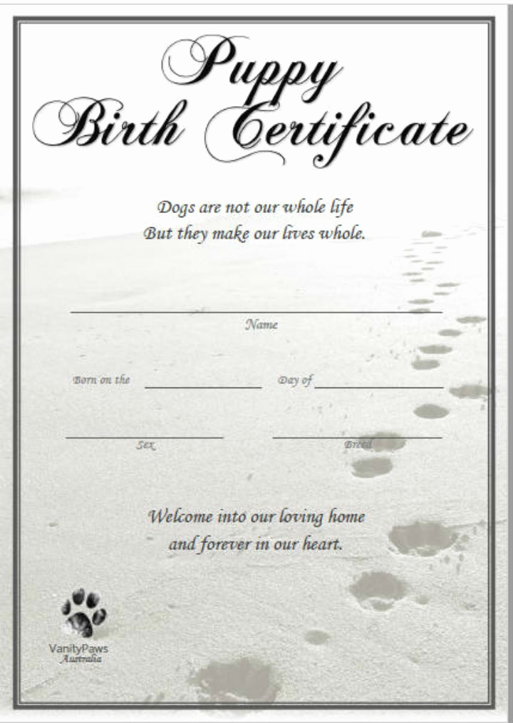 Editable Birth Certificate Template New Free 6 Editable Ficial Puppy Hospital Birth Certificate