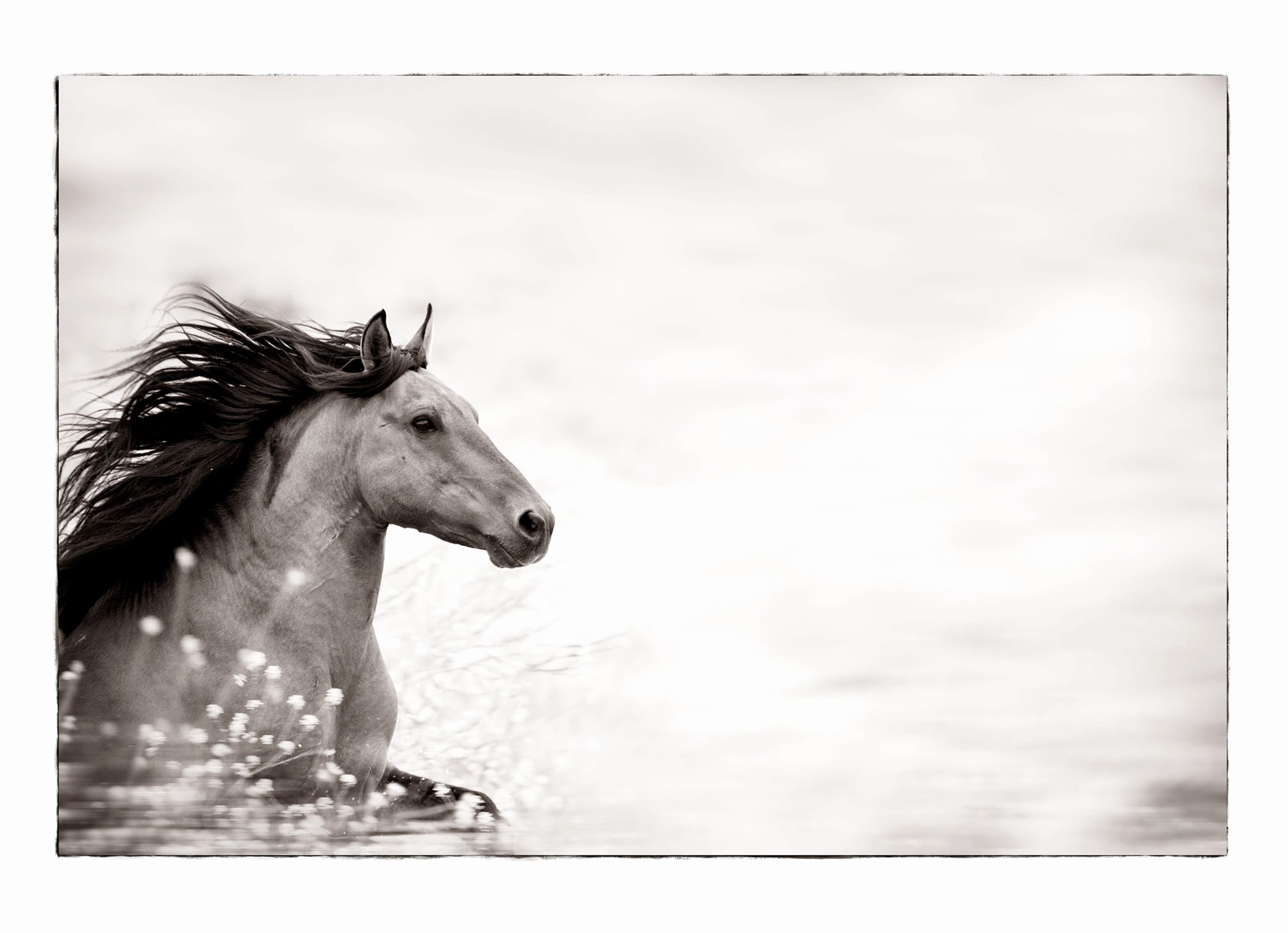 Horseback Riding Gift Certificate Template Lovely Horse Gift Certificate Template Free