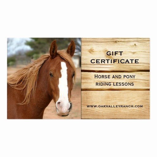 horse riding lessons t certificate template business card